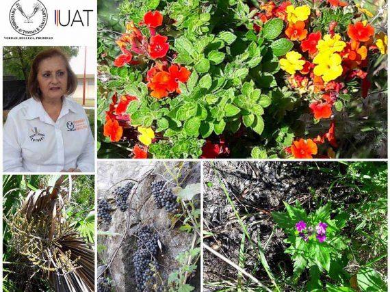 Aporta la UAT estudios científicos para clasificar plantas medicinales de Tamaulipas.